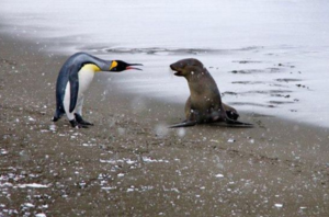 Photo of penguin and seal on a beach appearing to argue